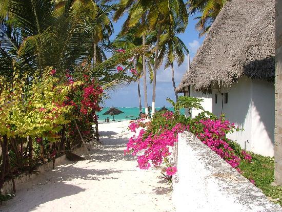 Zanzibar Island, Tanzania: Kaliedoscope of colour!