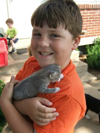 Jonde Lane Farm B&B: Noah with a friendly kitten.  They were all so cute and moms didn't mind them being handled.