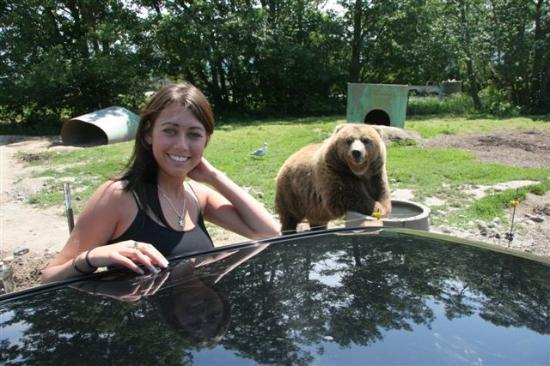 This Is As Close As We May Ever Come To A Bear Picture Of Olympic Game Farm Sequim Tripadvisor