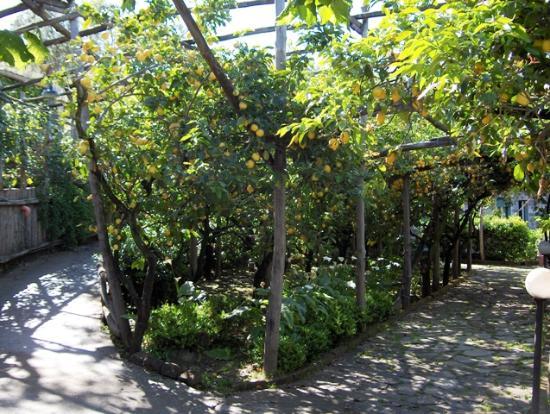 Hotel Bristol: You walk through a lemon grove to get to the Villa