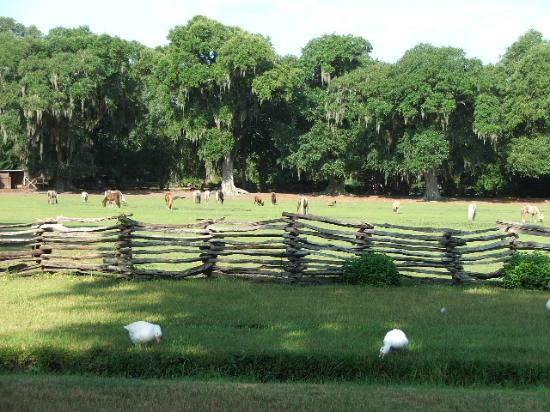 Residence Inn Charleston Airport: Morning at Magnolia Plantation