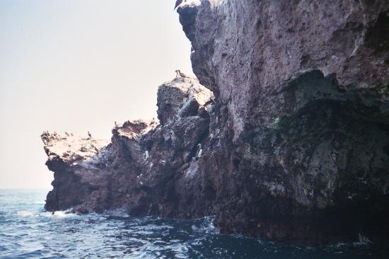 Bay of Banderas: Birds Nesting