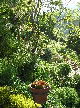 Le Torricelle : Gardens