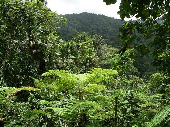 East Winds: Deep in the rainforest