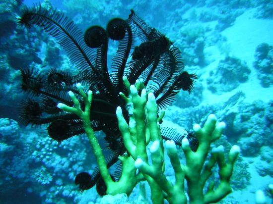 Domina Coral Bay Prestige Hotel: Sea life
