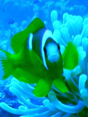 Domina Coral Bay Prestige Hotel: Nemo!!!