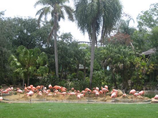 Serengeti Safari Picture Of Busch Gardens Tampa Tampa