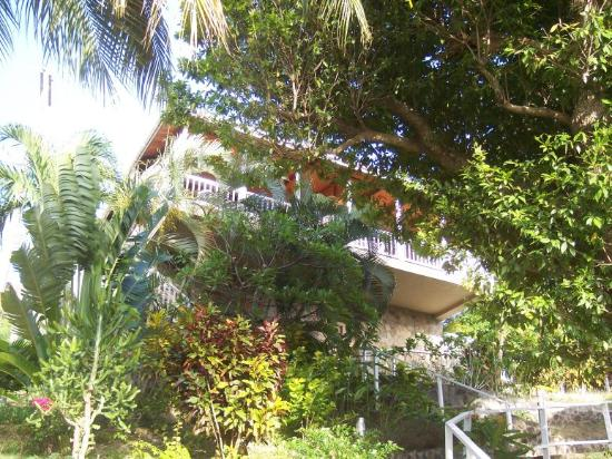 Frangipani Hotel: Outside of the deluxe room surrounded by lush vegetation