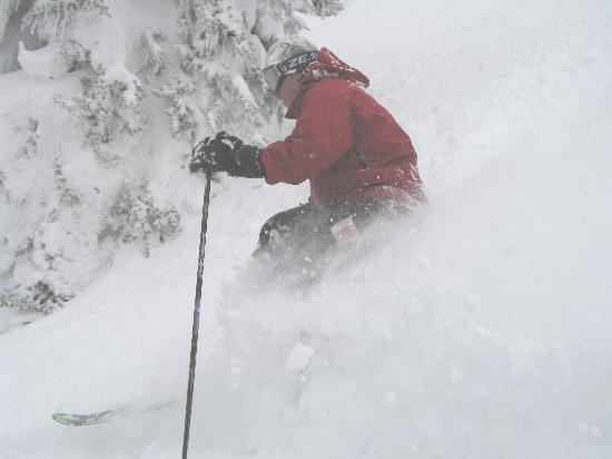 Big Red Cats: More powder ...