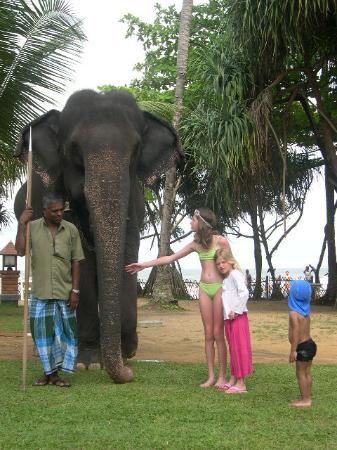 Royal Palms Beach Hotel: jardin de l'hotelvisite d'un éléphant