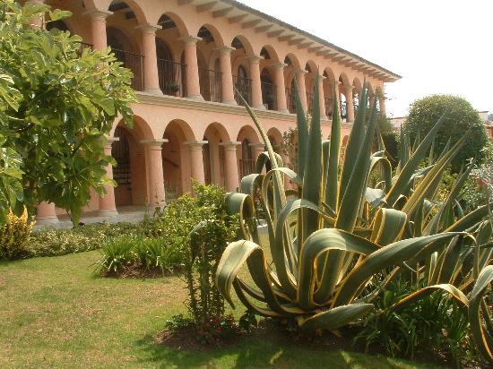 Hotel Rincon del Arco: agaves