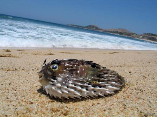 La Jolla de Los Cabos: Stuff you could find washed up on the beach