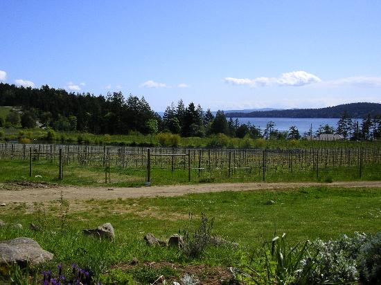 Poets Cove Resort & Spa: Saturna Vineyard