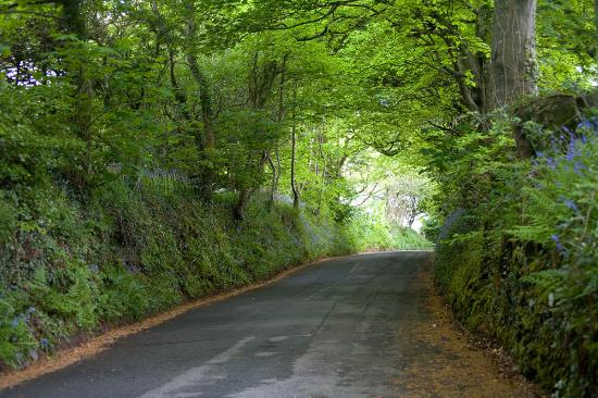 Lanteglos Country House Hotel: Tunnel of green leading to LCH