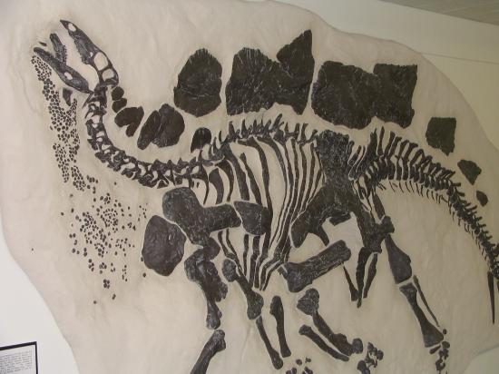 University of Wyoming Geological Museum: Stegosaurus