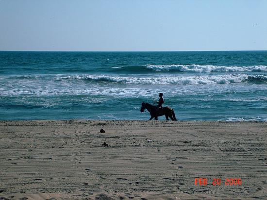 Barra Vieja Beach : In addition to this, we also saw a wild horse bolting down the beach.