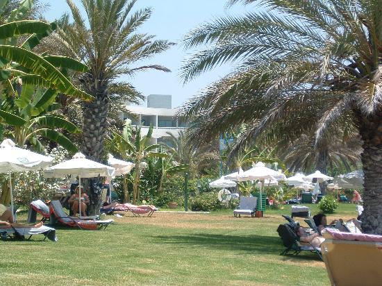 Constantinou Bros Athena Beach Hotel: view from the sunbed