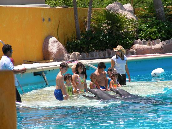Villa del Palmar Flamingos Beach Resort & Spa Riviera Nayarit: Kids dolphin experience