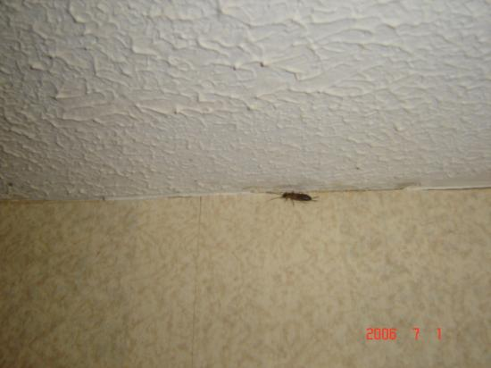 Days Inn Vernon: bug that was in bathroom, and bed