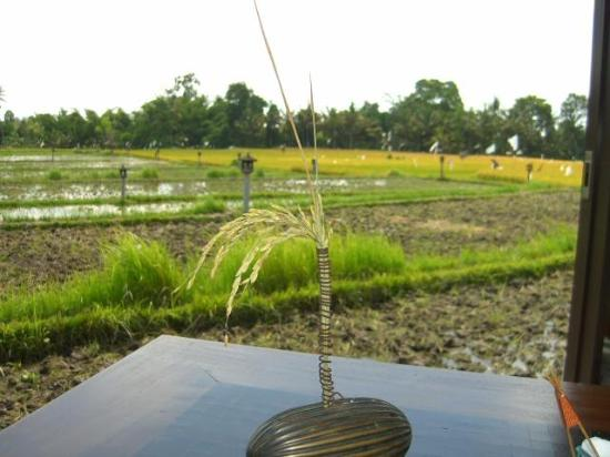 The Chedi Club Tanah Gajah, Ubud, Bali – a GHM hotel: View over paddy fields from restaurant