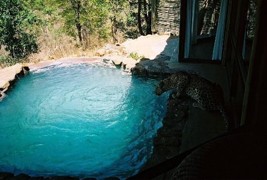 Leopard Hills Private Game Reserve: Wow!
