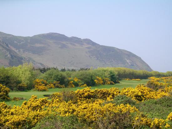Conwy Golf Club: Sixteenth green with Conwy Mountain beyond