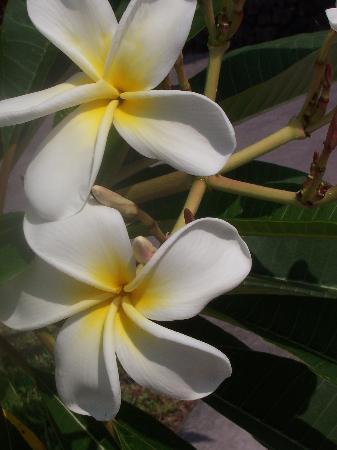 Luana Inn: The best smelling flower in the world...