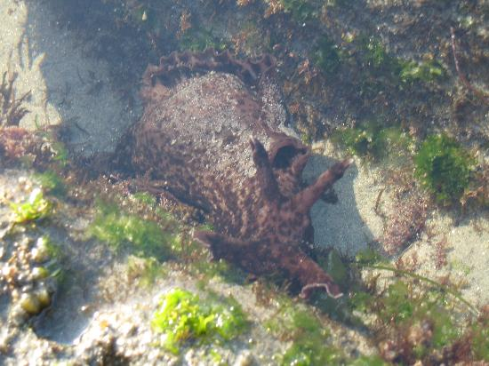 San Elijo State Beach Campground : The Wild Life (neat stuff when the tide is out)