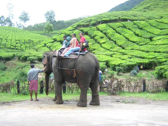 Munnar Inn: Jolly good ride on Lalitha, the elephant