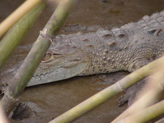 Occidental Papagayo - Adults only: croc - river cruise