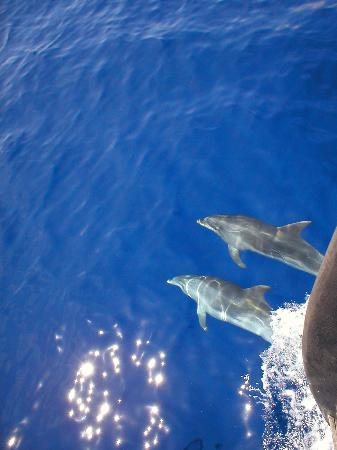Suite Hotel Eden Mar: Dolphins seen from the Santa Maria (a must if you visit Funchal)