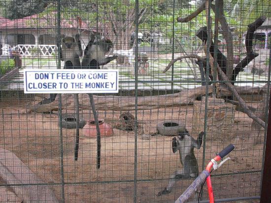 Akosombo, Ghana: Moneky Cage