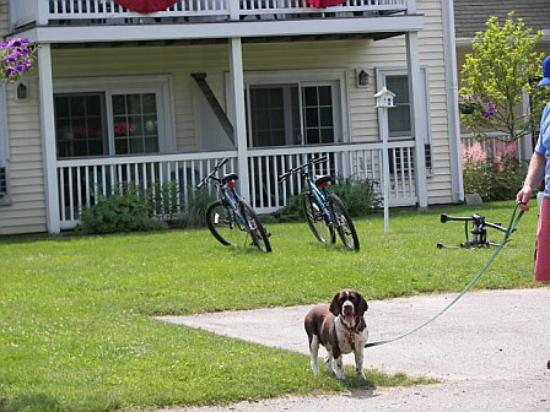 My dog, enjoying his stay at The Country Inn at Camden/Rockport
