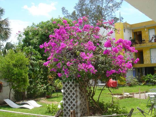 Maya Cozumel: Bouganvilla in Maya courtyard 3/05