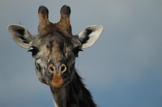 Fairmont Mara Safari Club: Up Close & Personal
