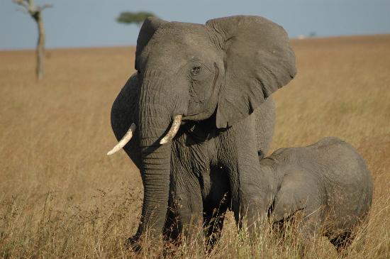 Fairmont Mara Safari Club: Family Time on the Mara