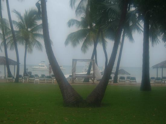 Copamarina Beach Resort: garden