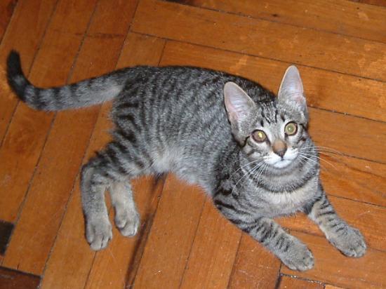 La Vela Hotel: Pet Cat in the Lobby