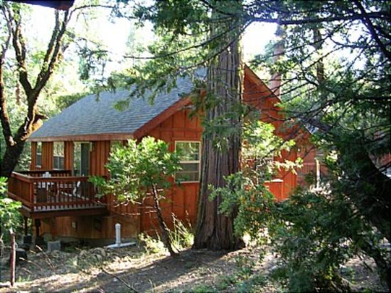 Evergreen Lodge at Yosemite: Cabin
