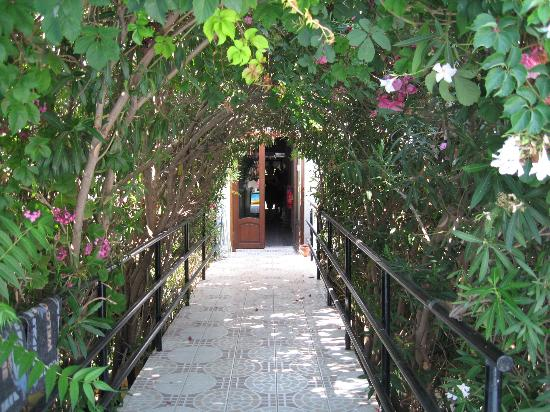 ألكيون هوتل: Pool / breakfast area entrance