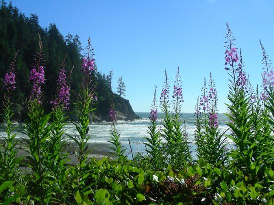 Cannon Beach, Όρεγκον: Short Sands Beach at Oswald West State Park
