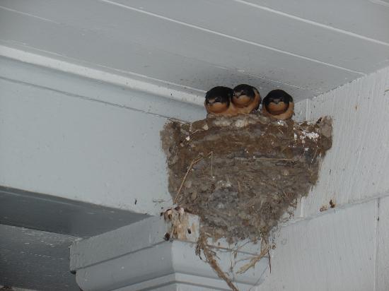 Coast Guard House Historic Inn: nest by door