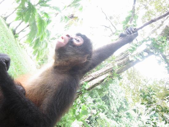Bosque del Cabo Rainforest Lodge: Monkey Swing
