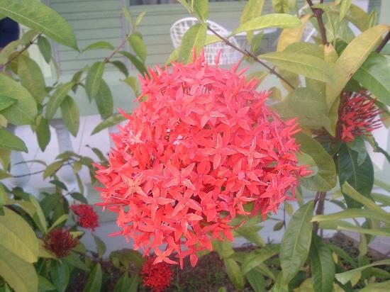 Hidden Paradise Resort Hotel: Garden Flower