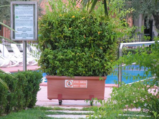 Hotel Villa Olivo: Pool - The forbidden zone