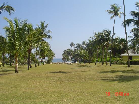 Nisbet Plantation Beach Club: View towards beach from halfway point (beach to Main House)