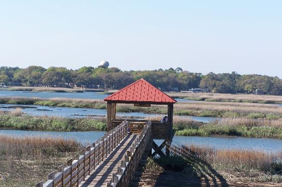 Disney's Hilton Head Island Resort: View from the shuffleboard court