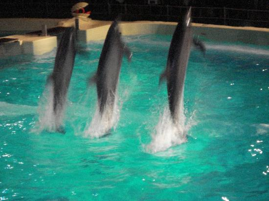 Harderwijk, The Netherlands: Dolphins performing acrobatics