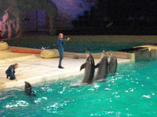 Dolfinarium: Team Dolphins
