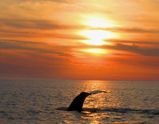 Harmony Bed & Breakfast: Whale Watching 4 near by @ Brier Island
